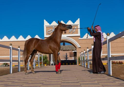 saudi man with his Arabian horse in Alhazm stud, Najran Province, Khubash, Saudi Arabia