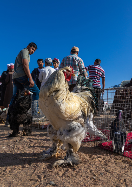 Saudi people in the bird and poultry market, Najran Province, Najran, Saudi Arabia