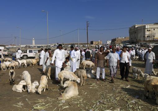 Animal market, Jizan Province, Sabya, Saudi Arabia