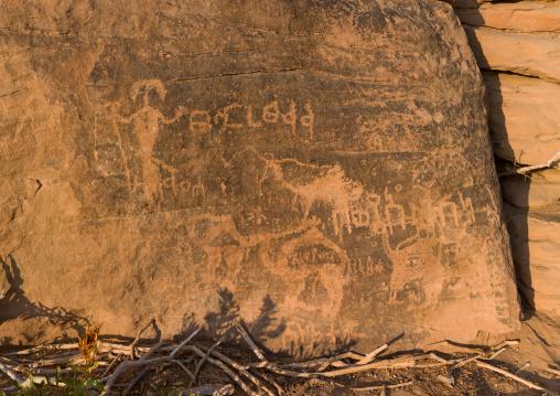 Camels and human petroglyphs, Najran Province, Najran, Saudi Arabia