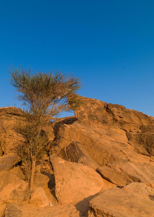 Petroglyphs site, Najran Province, Najran, Saudi Arabia
