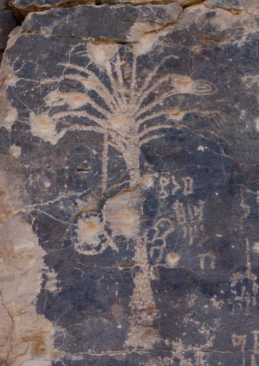 Petroglyphs on a rock depicting a palm tree, Najran Province, Abar Himma, Saudi Arabia