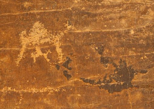 Petroglyphs depicting camels in abar himma, Najran Province, Najran, Saudi Arabia