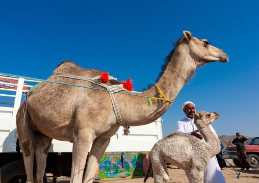 Camel market outside of the city, Najran Province, Najran, Saudi Arabia