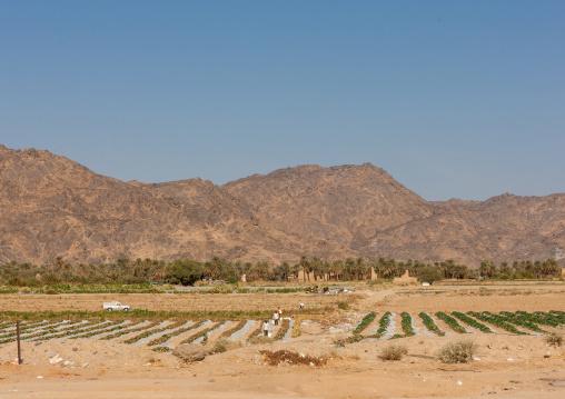 Agriculture in the desert, Najran Province, Najran, Saudi Arabia