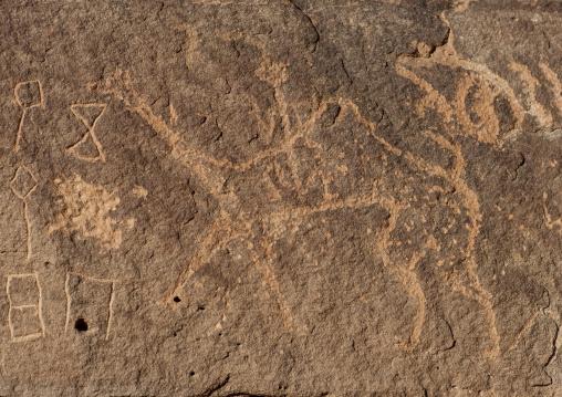 Petroglyphs on a rock depicting camels, Al Madinah Province, Alula, Saudi Arabia