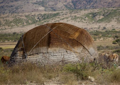 Somali Hut Aqal Soomaali, In The Bush, Somaliland