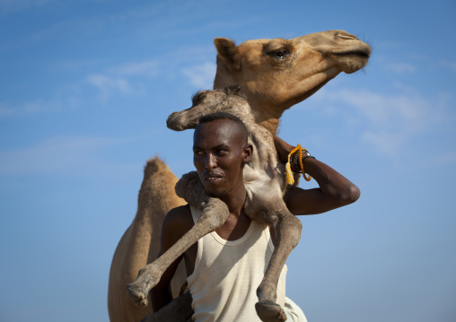 A Man Is Holding A Baby Camel On His Back, Lughaya Area, Somaliland