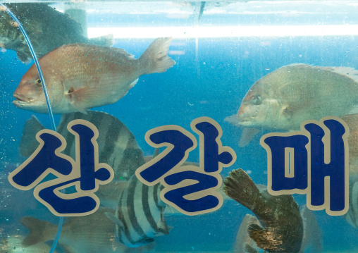 Aquarium in noryangjin fisheries wholesale market, National capital area, Seoul, South korea