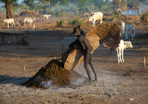 Mundari tribe boy collecting dried cow dungs in a cow skin to make bonfires to repel mosquitoes and flies, Central Equatoria, Terekeka, South Sudan