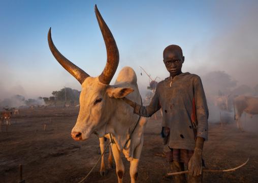 Mundari tribe boy with a long horns cow in a camp, Central Equatoria, Terekeka, South Sudan