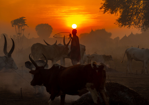 Long horns cows in a Mundari tribe camp gathering around bonfires to repel mosquitoes and flies, Central Equatoria, Terekeka, South Sudan