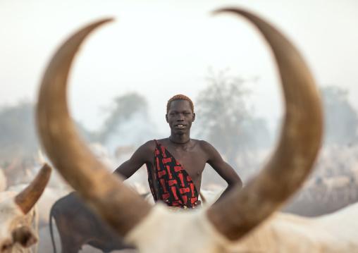 Mundari tribe man with long horns cows in a camp, Central Equatoria, Terekeka, South Sudan