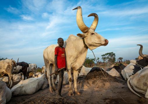 Mundari tribe boy with a long horns cow, Central Equatoria, Terekeka, South Sudan