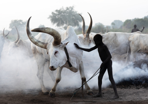 Mundari tribe boy taking care of the long horns cows in the camp, Central Equatoria, Terekeka, South Sudan