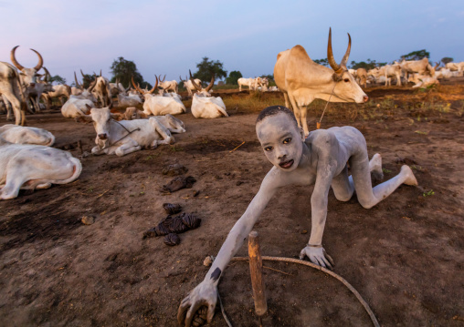 Mundari tribe boy collecting dried cow dungs to make bonfires to repel mosquitoes and flies, Central Equatoria, Terekeka, South Sudan