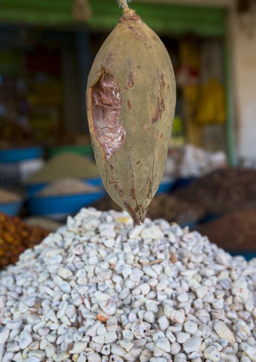 Sudan, Khartoum State, Omdurman, baobab fruit