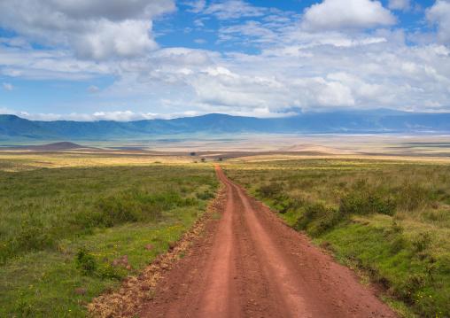 Tanzania, Arusha Region, Ngorongoro Conservation Area, a dirt track dissecting a vast short grass savannah plain surrounded by a volcano caldera wall