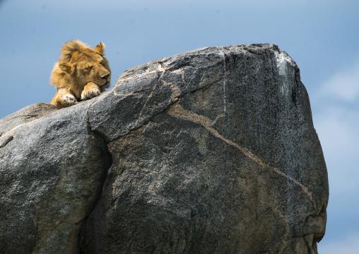 Tanzania, Mara, Serengeti National Park, african lion (panthera leo) sleeping on a kopje