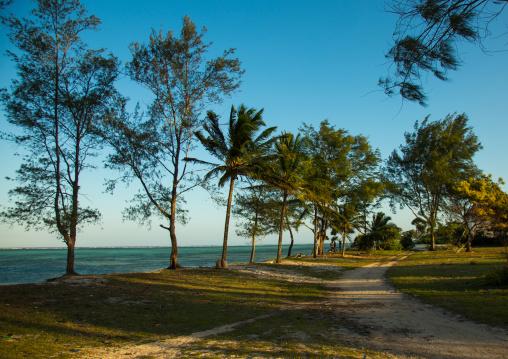 Tanzania, Zanzibar, Kizimkazi, trees on a sandy beach