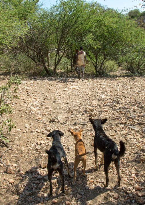 Tanzania, Serengeti Plateau, Lake Eyasi, hadzabe tribe men hunting with dogs