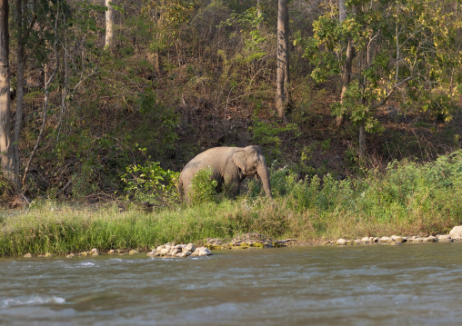 Elephant in nam peang din village, North thailand