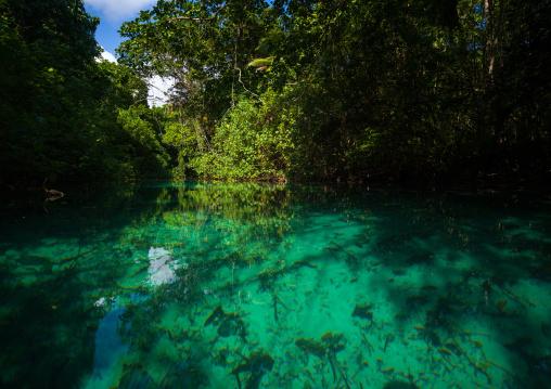Green water river, Sanma Province, Espiritu Santo, Vanuatu