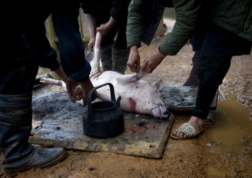 Black hmong men killing a pig, Sapa, Vietnam