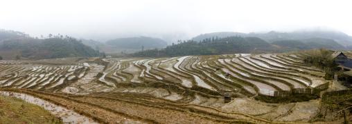 Terrace paddy fields, Sapa, Vietnam