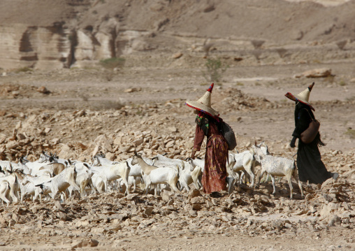 Two Hadramaut Sheperd Women Wearing High Hats Walking Behind Their Goats, Yemen